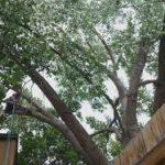 Tree Removal Company Aurora CO