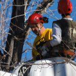 Tree Branch Removal Aurora CO