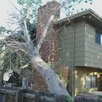 Tree Removal Service in Aurora, CO