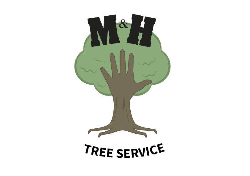 Tree Removal & Trimming Denver CO | M & H Tree Service
